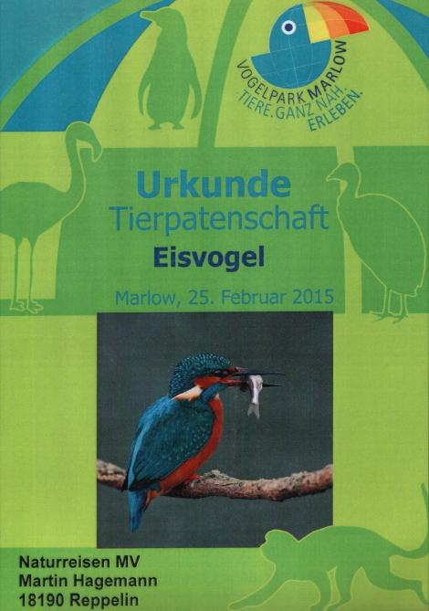 Eisvogel-Patenschaft für den Vogelpark Marlow