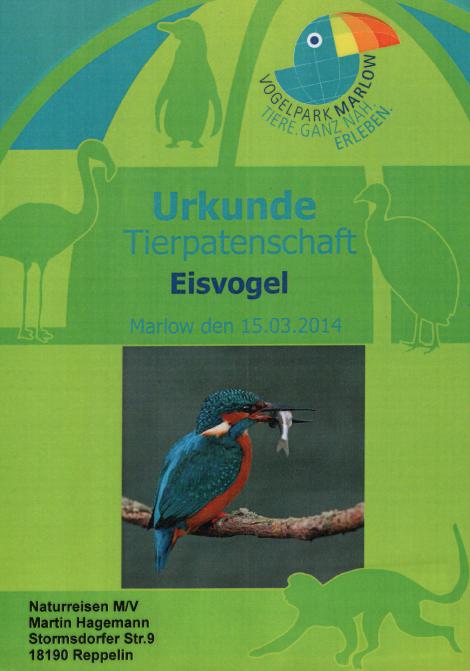 Naturreisen MV ist Tierpate für einen Eisvogel im Vogelpark Marlow