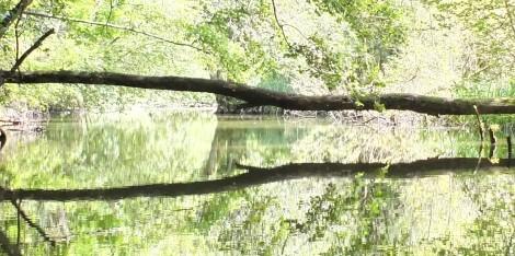 Die Mildenitz - Wildnis & Schönheit