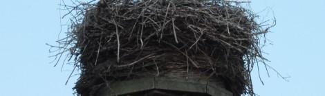 Storchentour durch die Grüne Stadt Marlow